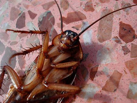 ¿Qué significa soñar con cucarachas?