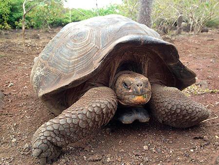 ¿Qué significa soñar con tortugas?